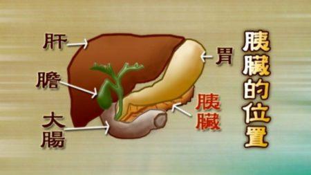 膵液(すいえき)―膵臓のケアを大切に