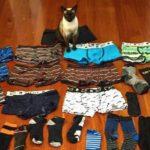 飼い猫の特別なコレクション