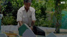【命を考える】15年にわたり多くの胎児の命を救ったベトナム人