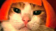 白猫、トラ猫、濡れネコ…キュン死確実の猫がかわいい映画のフォトジェニック10連発!