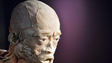 【英国】展示会の人体標本に中国共産党「オンデマンド殺人」犠牲者の疑い