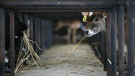 人畜の炭疽菌感染が発生 政府「牛9頭死亡」=中国内モンゴル