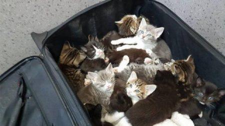 【動物虐待】廃棄されたスーツケースの中は15匹の子猫がすし詰めだった!