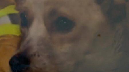 【忠犬】火事の中、家族がかわいがっていた子猫4匹を命がけで守った犬