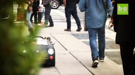 【NY】犬用フェラーリに乗って散歩するセレブ犬