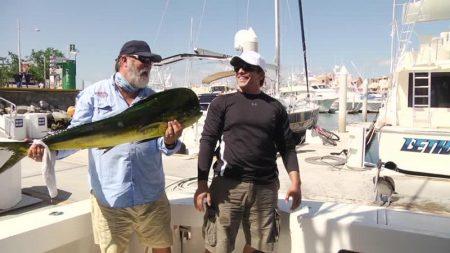 【釣り】大物シイラを釣り上げてドヤ顔の釣り人 ●●に獲物を盗られる