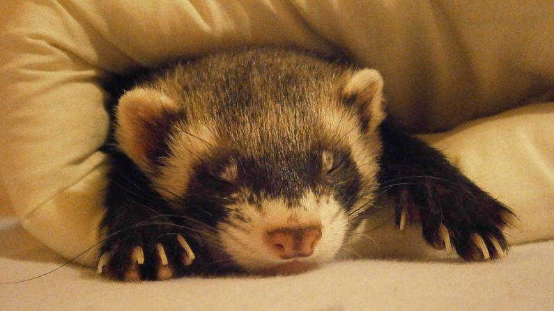おやすみなさ~い!靴下がかわいすぎる寝袋に大変身⁉