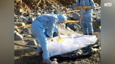 【動画ニュース】台湾の無人島に2頭目の豚の死骸漂着 アフリカ豚コレラ検出