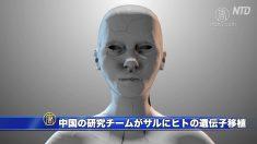 【動画ニュース】中国の研究チームがサルにヒトの遺伝子移植 米科学者は倫理上の懸念を指摘