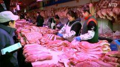 【動画ニュース】中国当局が豚肉増産を呼びかけるも「誰も従いたくない」