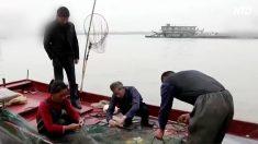 魚の減る長江で10年間の禁漁措置 専門家は「三峡ダムが元凶」