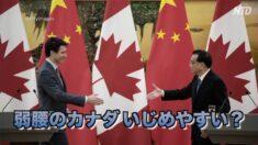 弱腰はいじめやすい?カナダで対中国政策見直しの声【疫病と中共】
