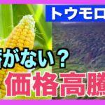 中国のトウモロコシ価格が4年ぶりに高値 物価指数も上昇