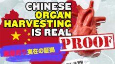 中国での臓器狩は実在する!6つの事実から検証する【チャイナ・アンセンサード】