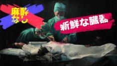 麻酔なし!中共による強制臓器摘出 在米中国人が実名告発