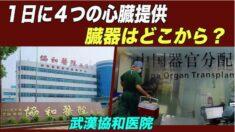 1日に4つの心臓提供 武漢協和医院の不可解な臓器入手ルート【禁聞】