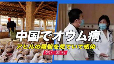 中国で「オウム病」 アヒルの屠殺を見ていて感染