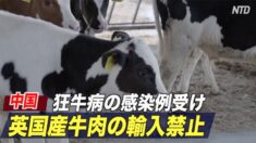 中国 英国産牛肉の輸入禁止 狂牛病の感染例受け
